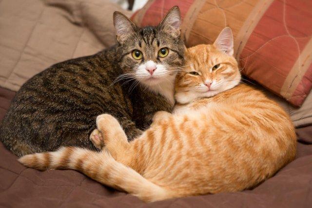 オス猫?メス猫?どちらがお好き?