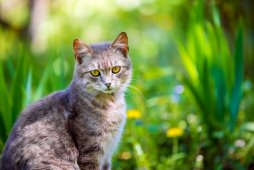 Portrait of a cat sitting outdoor in a garden in spring