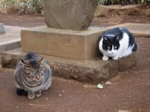 集まるノラ猫たち