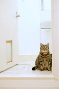 猫扉があるので猫ちゃんは自由におトイレに行けます。