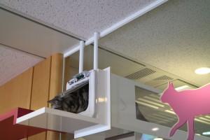 会議室とキャットルームを繋ぐ、猫だけの抜け道トンネル