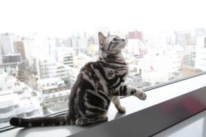 よくビルの外を眺めてひなたぼっこするのだそう。
