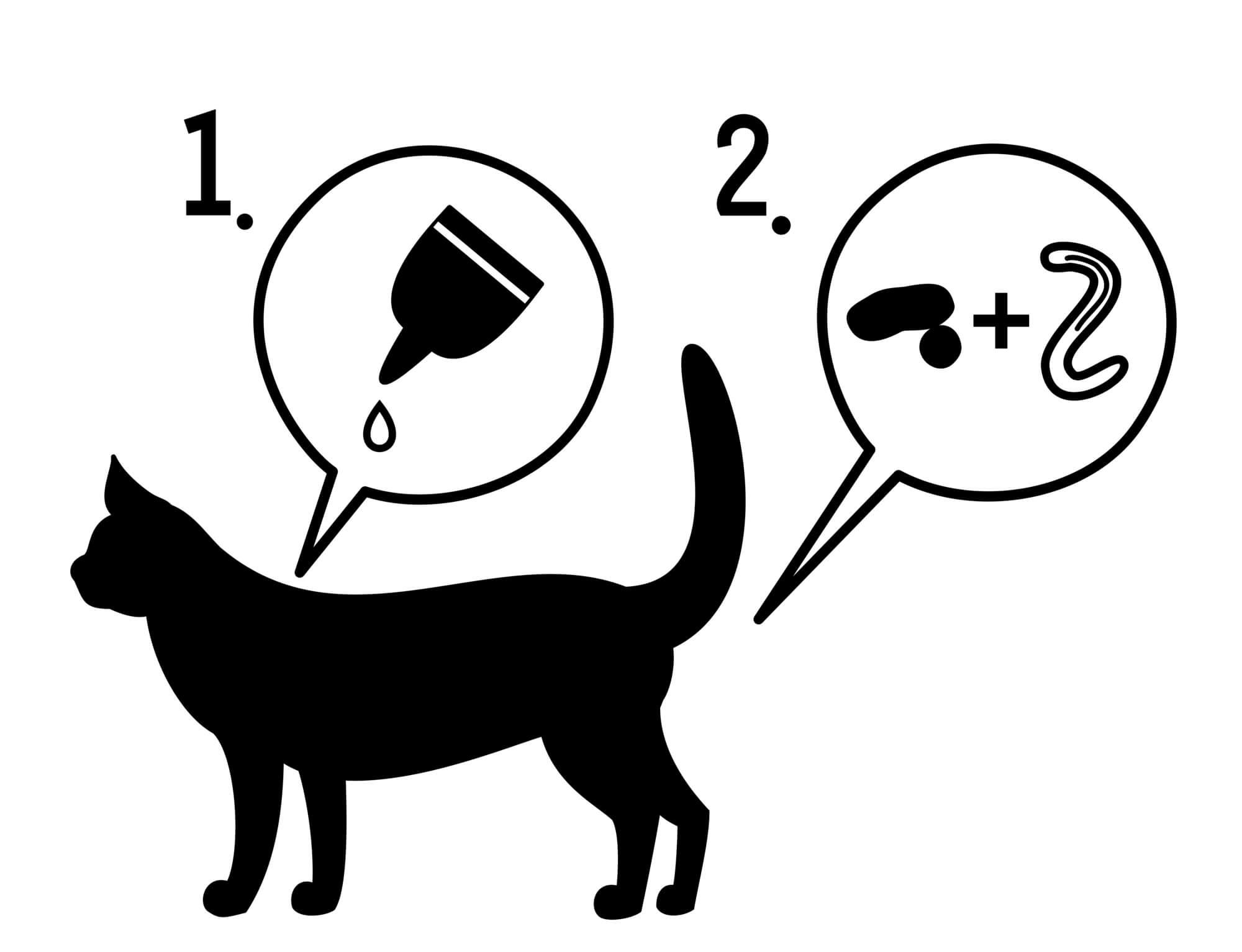 寄生虫 猫