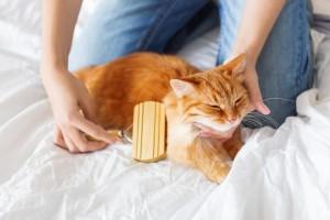 猫とスキンシップ