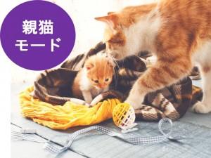 親猫モード