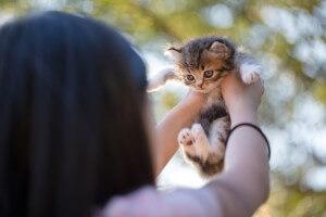猫 抱っこ2