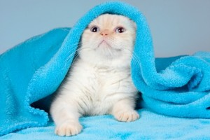 風邪をひいた猫