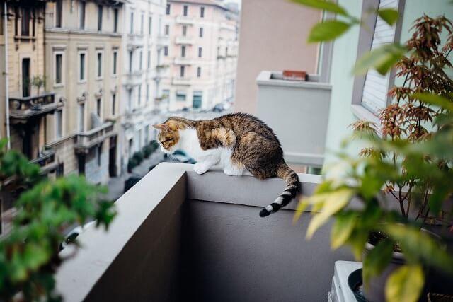 gatto appostato su parapetto di balcone guarda in strada