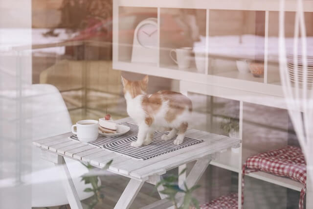 Cute cat with tasty dessert and cup of coffee on table in cafe, view from outside