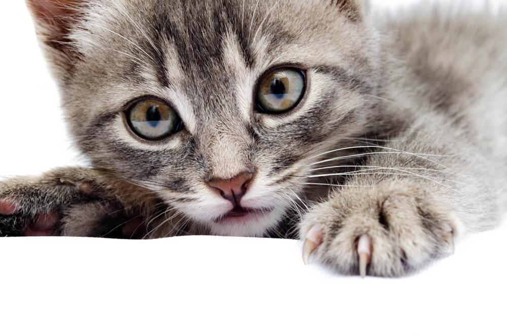 変わり 猫 生え
